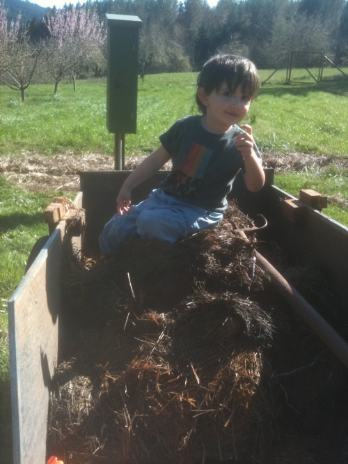 Ju-Ju being a big huge help spreading mulch.
